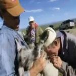 Dua gembala jatuh sakit gara-gara gigit testis biri-biri